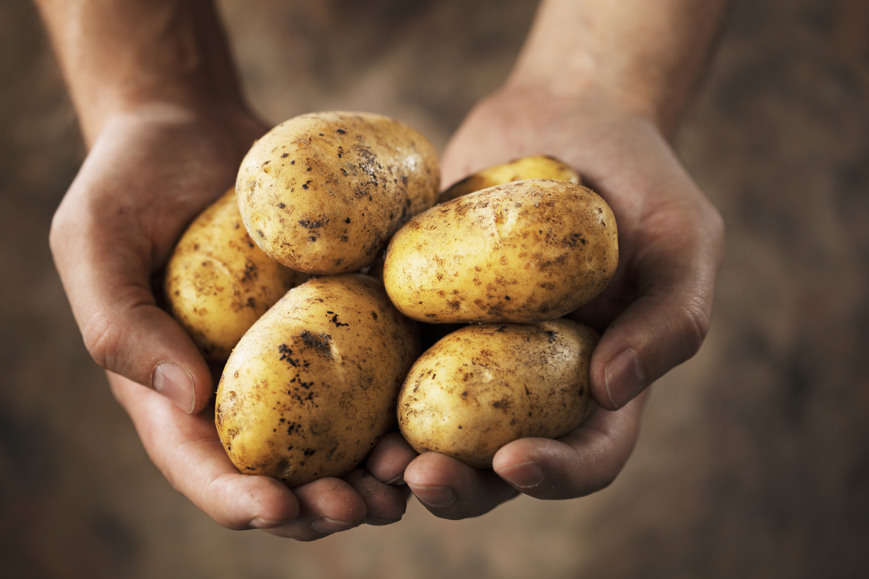 New Strain of GMO Potatoes Gets FDA Approval | Nature's